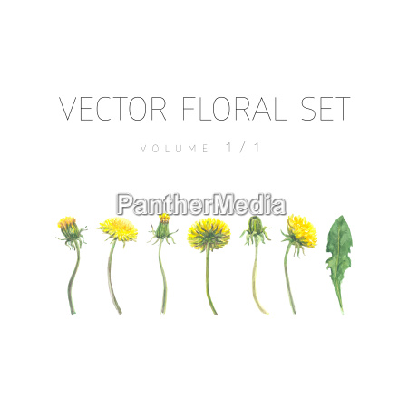 bright watercolor set of vector flowers