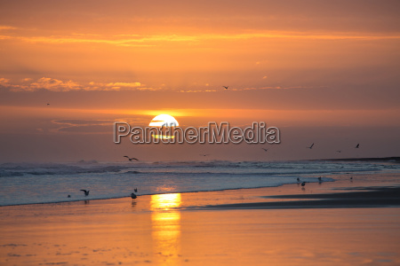 sunrise from bamburgh beach with seagulls