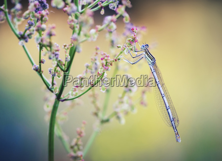 close up of dragonfly on wildflower