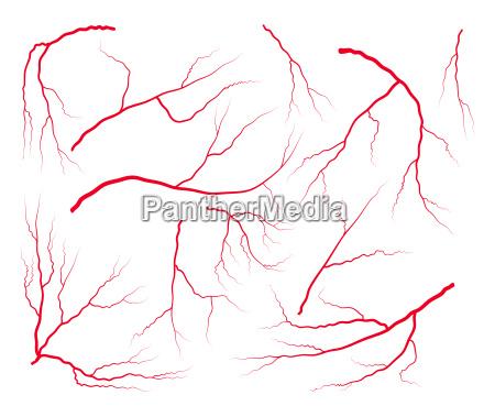 vein blood set vector symbol icon