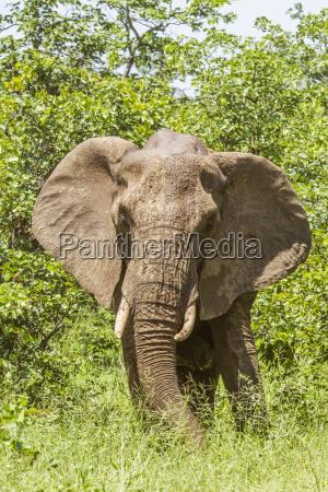close up of an african bush