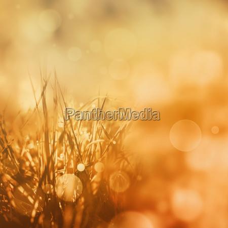 radiant golden autumn background