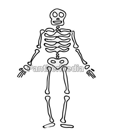 halloween skeleton vector symbol icon design