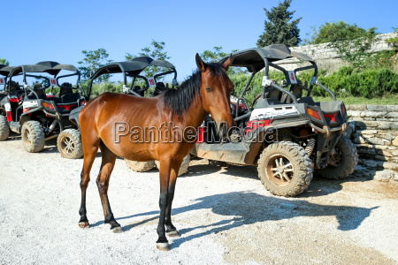 horse on srd hill