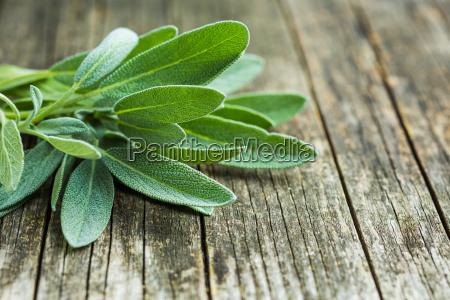 salvia officinalis sage leaves