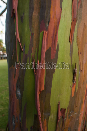 multi colored bark on trunk of