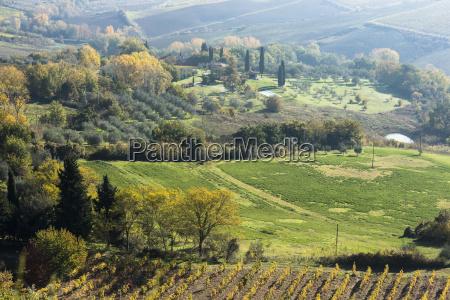 italy tuscany montepulciano landscape with vineyard