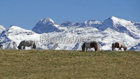 ponies against a magnificent backdrop