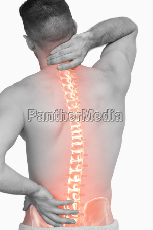 digital composite of highlighted spine of