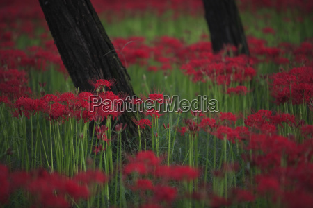 close up of a field of