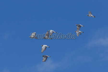 low angle view of small flock
