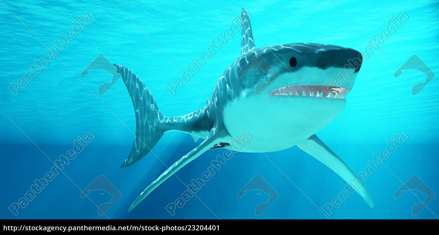 great, white, shark, with, sunrays - 23204401