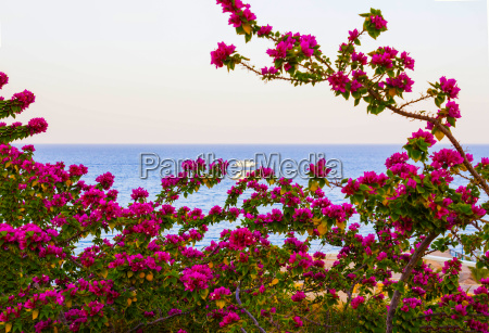 view of the red sea and