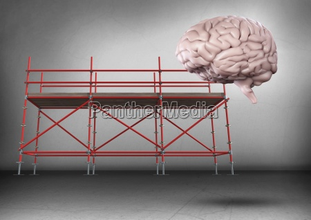 brain in front of scaffolding in