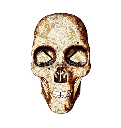 skull illustration in warm colors isolated