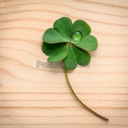 clovers leaves on wooden backgroundthe symbolic