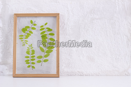 pressed and framed leaves of locust