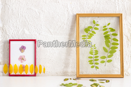pressed and framed petals and leaves