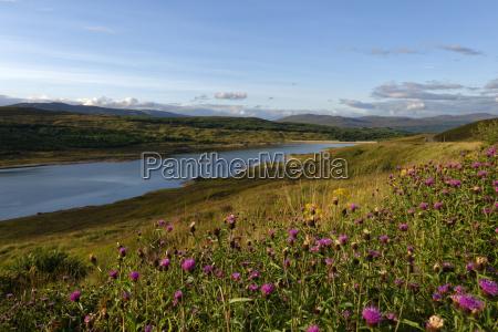 uk scotland northwest highlands flower meadow