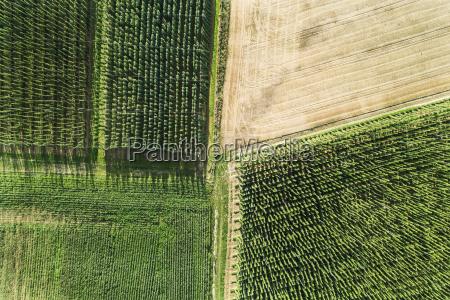 germany bavaria hop fields aerial view