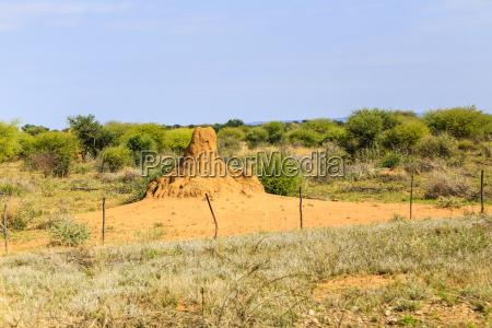 termite mound in namibia