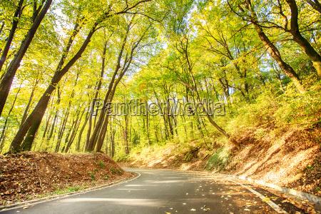 enjoying nature through forest