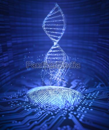 fingerprint genetic code dna