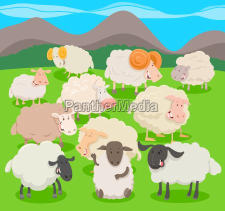 flock of sheep characters cartoon illustration