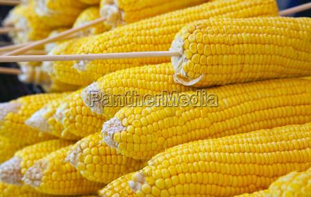 vegetable corn corncob prepared for grilling