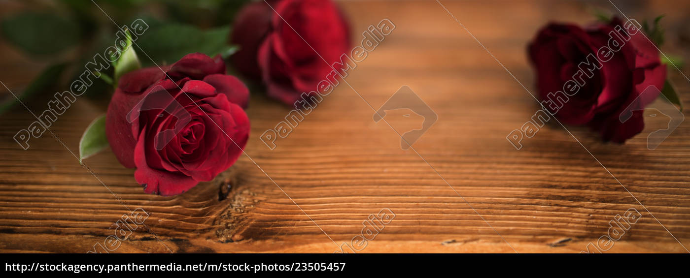 beautiful, red, roses, for, valentines, day - 23505457