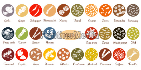 big set of flat culinary spices