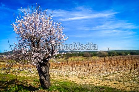 spring in the countryside