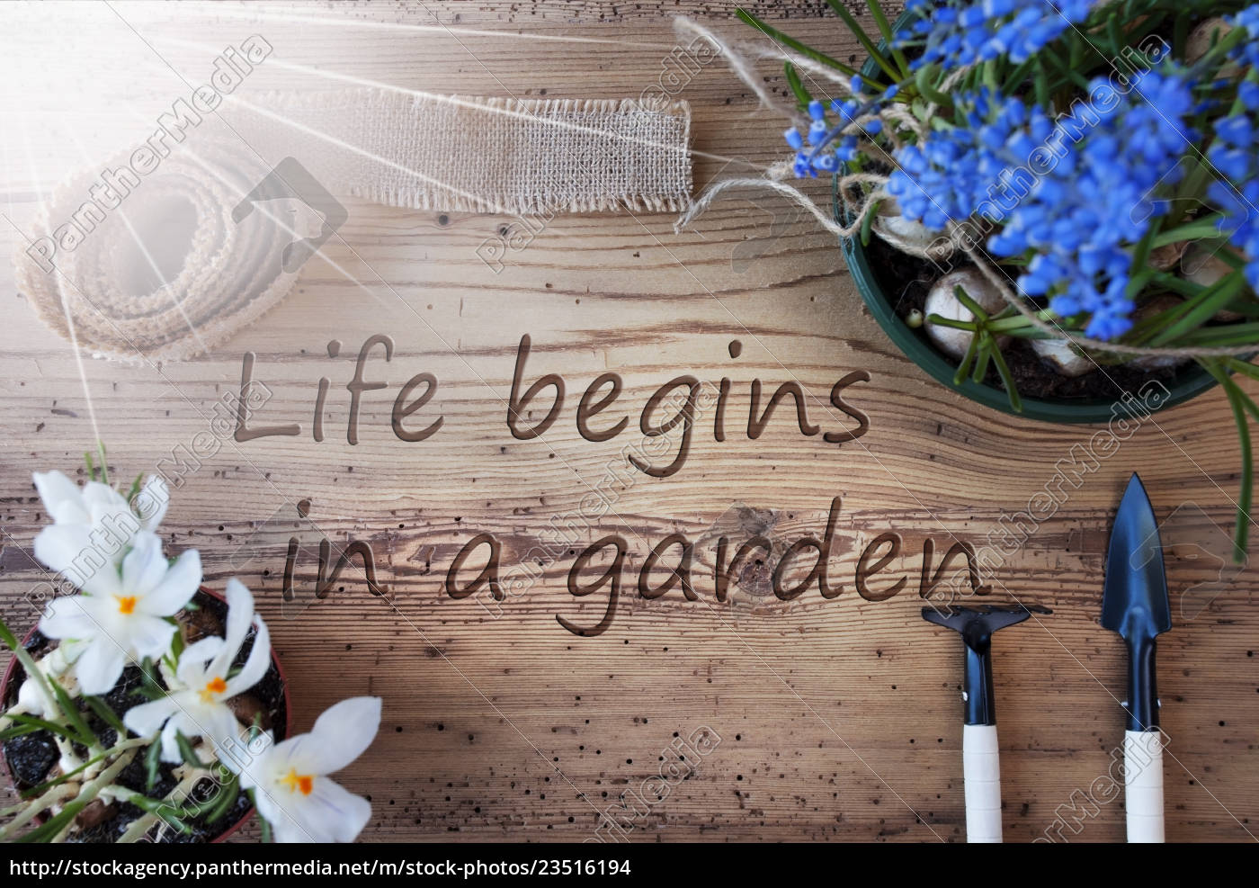 sunny, spring, flowers, , quote, life, begins - 23516194