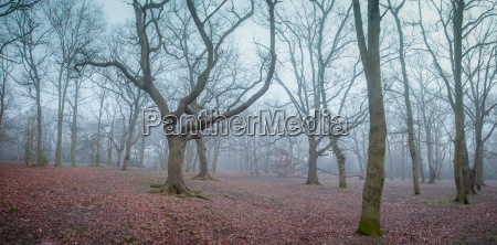 mystical forest at dawn