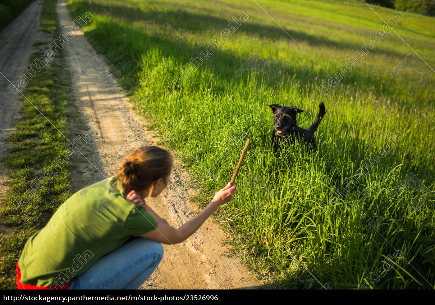 walking, the, dog, -, throwing, the - 23526996