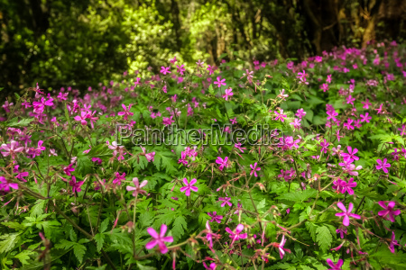 pink flowers in forest in garajonay