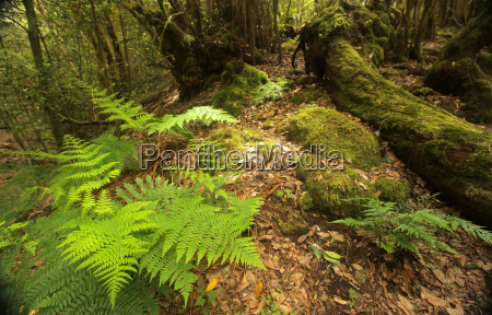 fern in garajonay national park