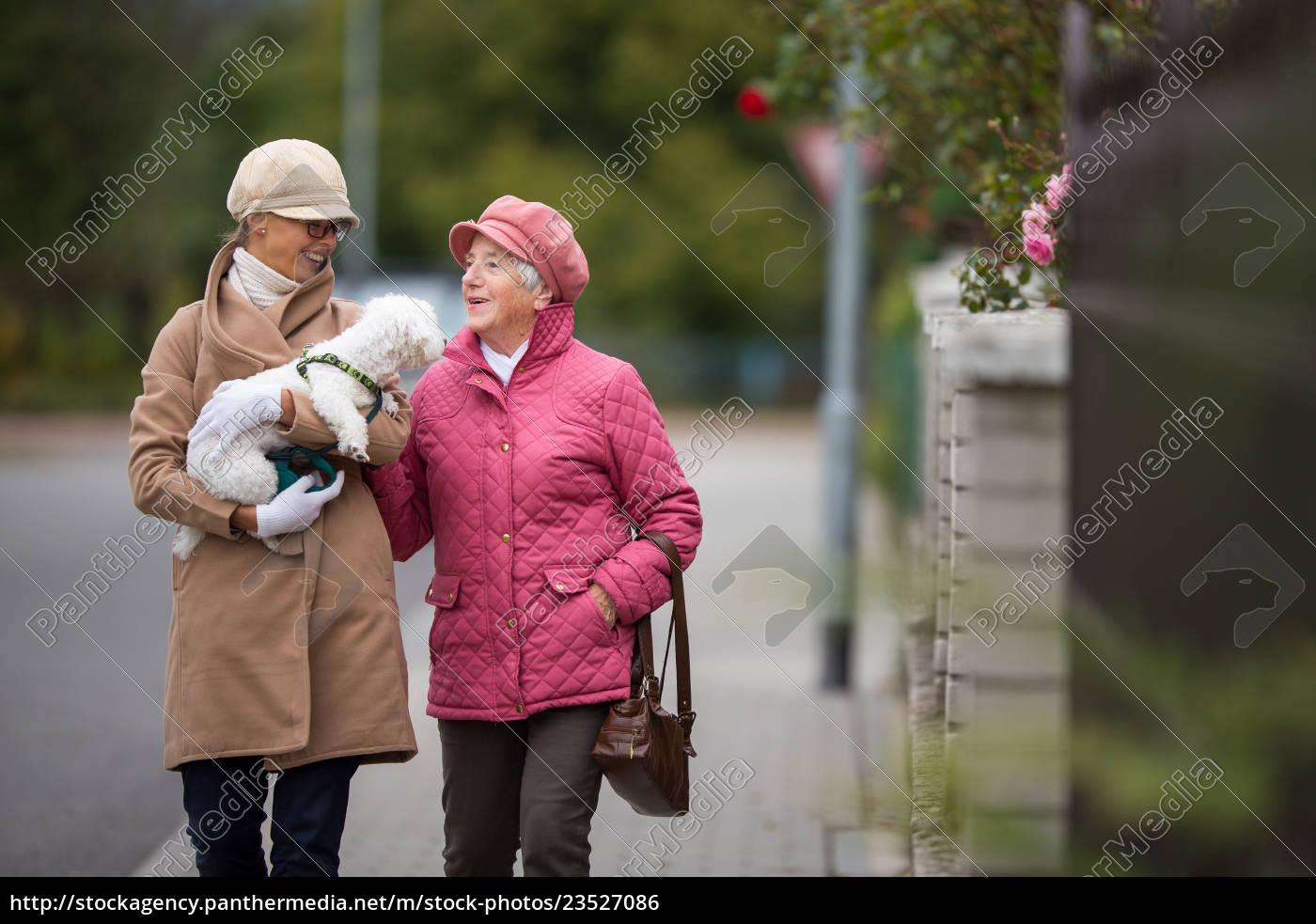 senior, woman, walking, her, little, dog - 23527086
