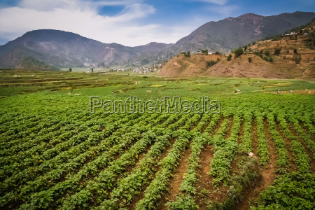 nepali agriculture