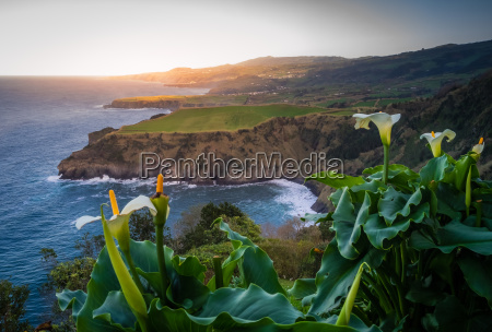 flowers on the sao miguel coastline