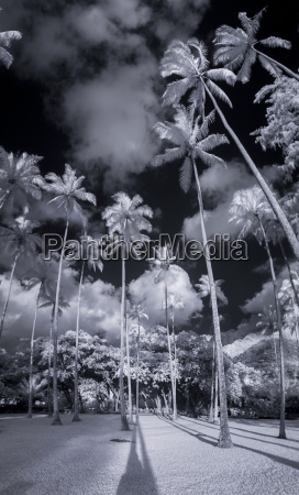 infrared view of scenery with palm