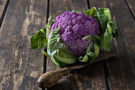purple cauliflower and old knife on