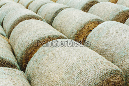 wrapped round hay bales in neat