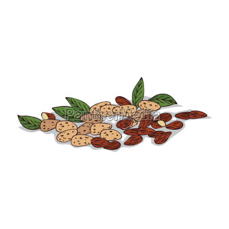 isolated clipart almond