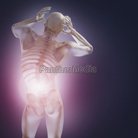 skeleton inside transparent man with back