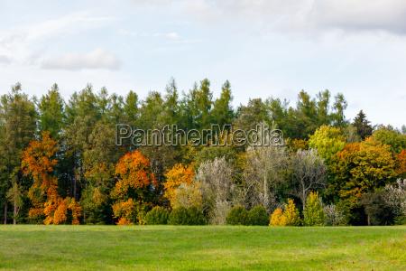 autumn trees with yellow and orange