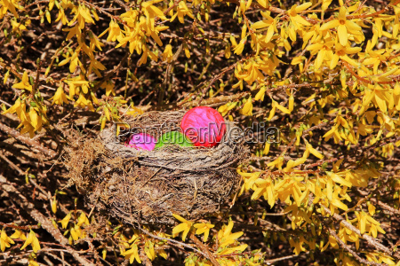 easter, nest, with, colorful, easter, eggs - 23630564