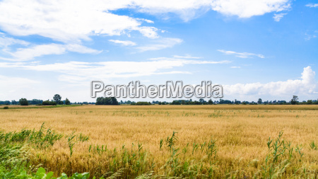 rural landscape in central poland in