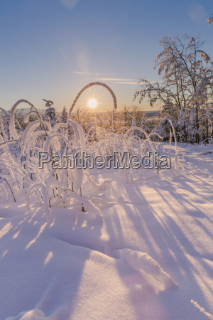 hoarfrost covered trees and brush at
