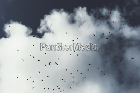 insects on glass against cloudy sky